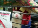 Aero at the Pet Store