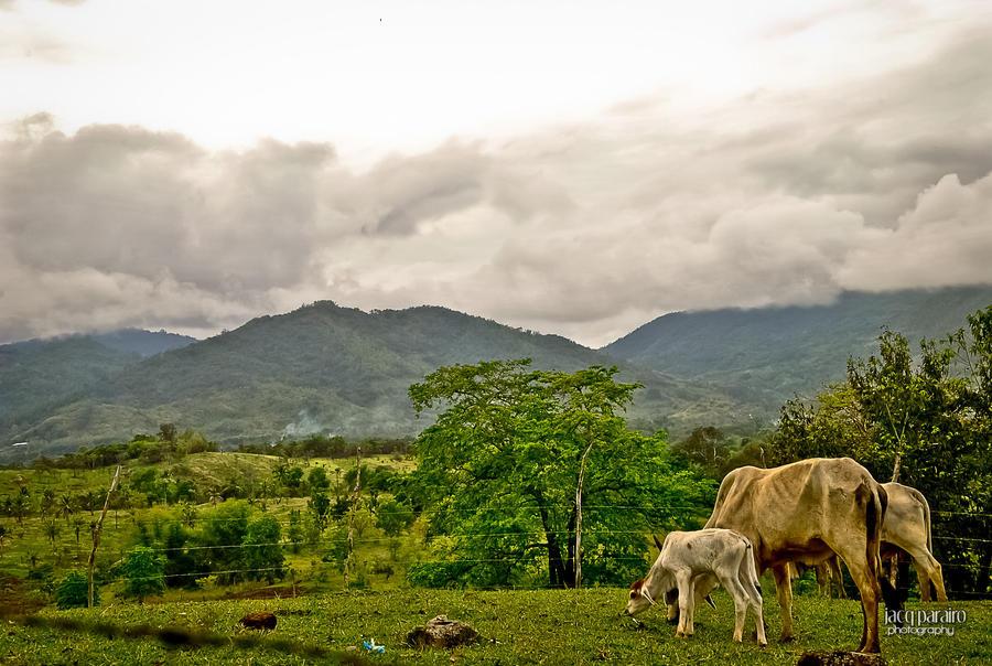 Buhay Rancho by isangkilongkamera