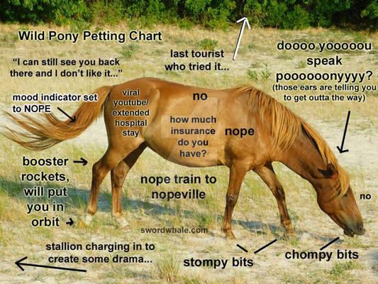 wild pony petting chart