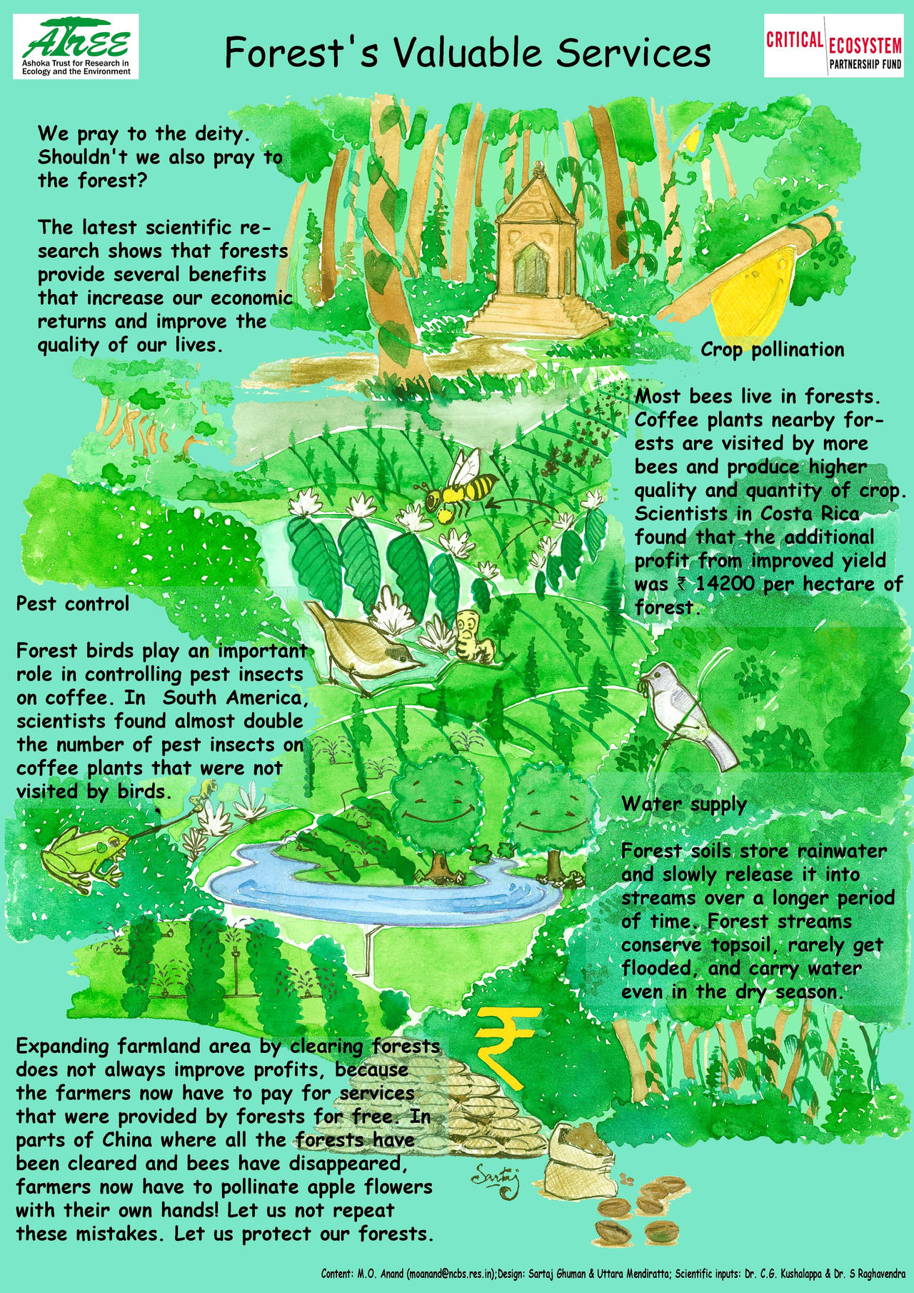 why the forests are great