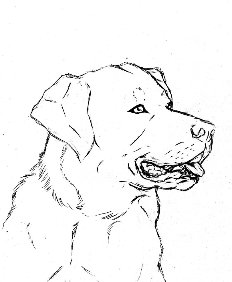 choclate lab coloring pages - photo#5