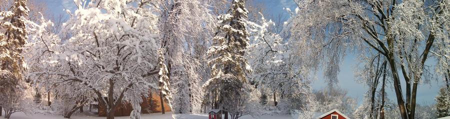 A Winter Wonderland #1
