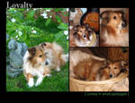 Animal Calendar - Corkie