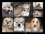Animal Calendar - Dusty, Daisy