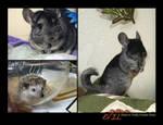 Animal Calendar - Rodents