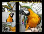 Animal Calendar - Balou