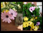 Floral Calendar - Daisies