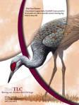 Bird TLC - Crane