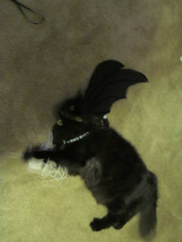 My Cat As Toothless