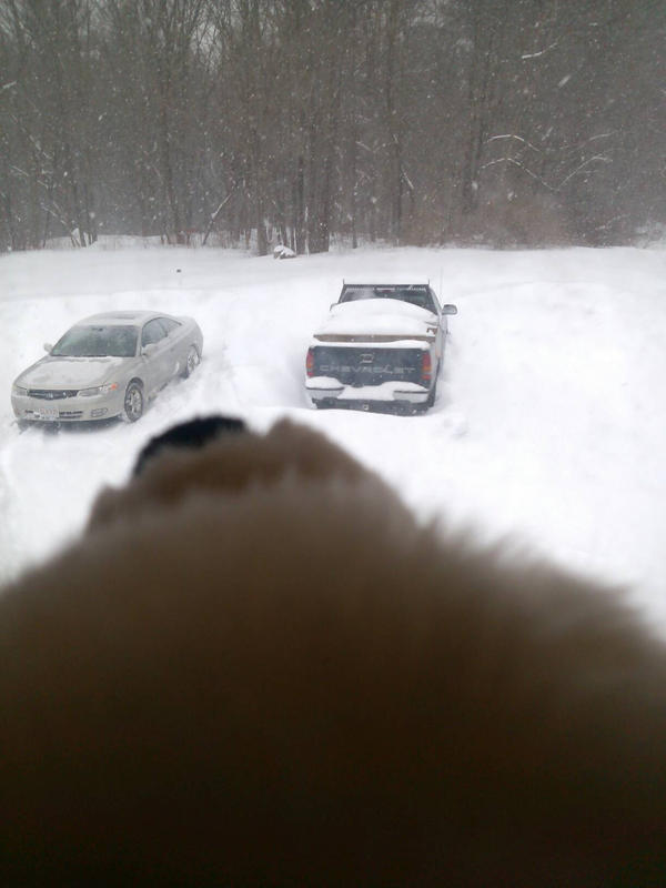 Kuma Watching The Snow by RoyalBakaness