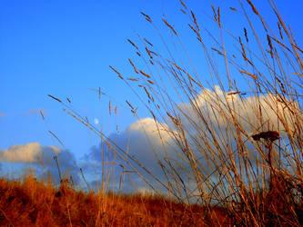autumn grass by dushka