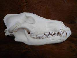 Alaskan Wolf Skull Stock by Minotaur-Queen-Stock