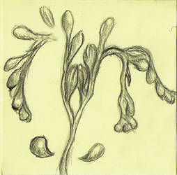 Drosera Rotundifolia by Kaelia