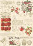 Strawberry Illustration 2