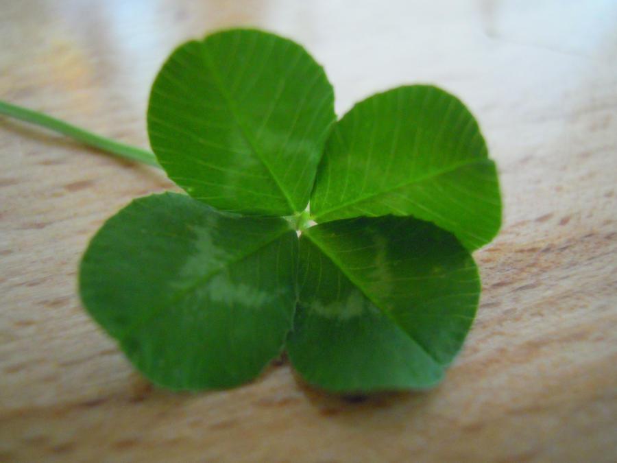 Four leaf clover stock by limestock d4jdb2u