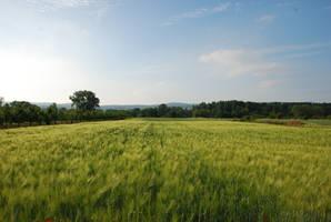Field stock by LimeStock