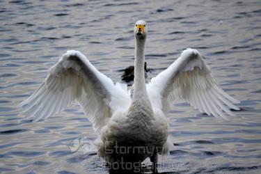 Hooper Swan on the go by StormyyWolf