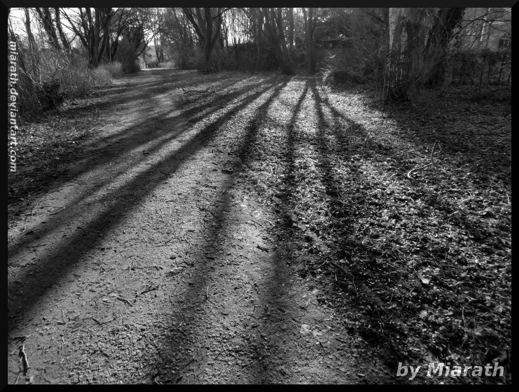 Long shadows by Miarath