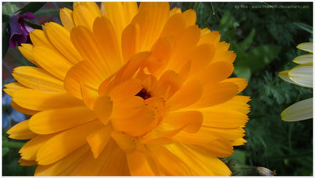 Orange Bloom by Miarath
