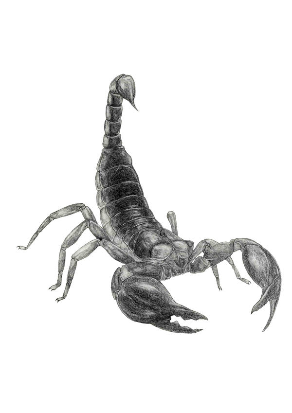 Scorpion by xiaobluexz