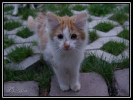 Kitten by Loupiotte1203
