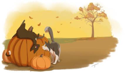 Pumpkin by Simatra