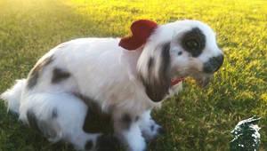 Bailey the Poseable Bunny by KaypeaCreations