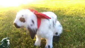 Bailey The Poseable bunny!