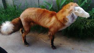 Poseable Softmount Skull Fox
