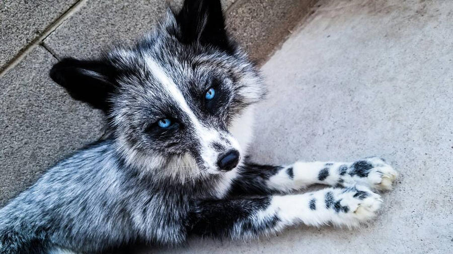 Poseable Fox Softmount  by KaypeaCreations