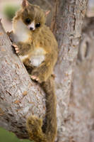Handmade Poseable Mouse Lemur by KaypeaCreations