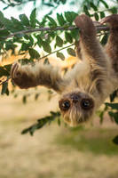 Handmade Poseable Two-Toed Sloth ( For Sale ) by KaypeaCreations
