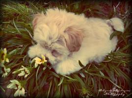 It's A Puppy Summer by Billy-Belynda