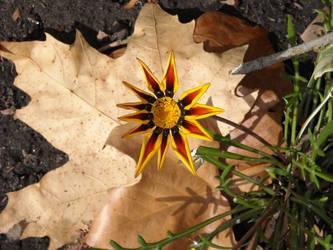 Autumn Flower by BioSnailPoker
