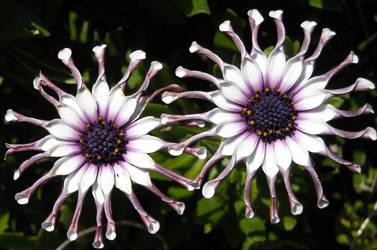 Like Flowery Sunglasses by BioSnailPoker