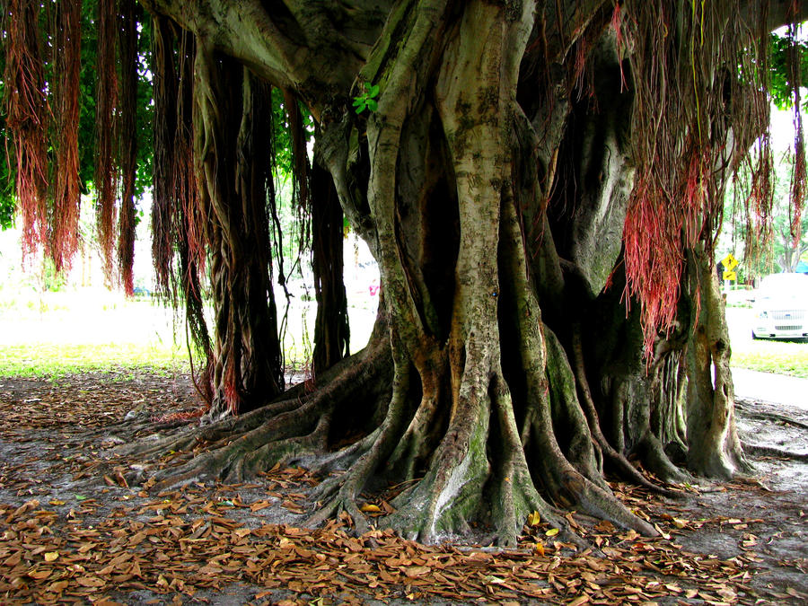 Under The Banyan Tree By Idrawnaked