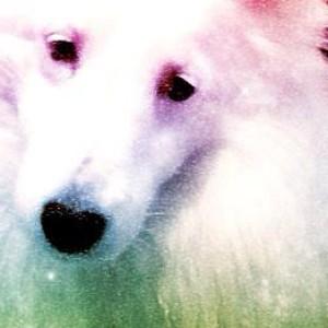 loveheart's Profile Picture