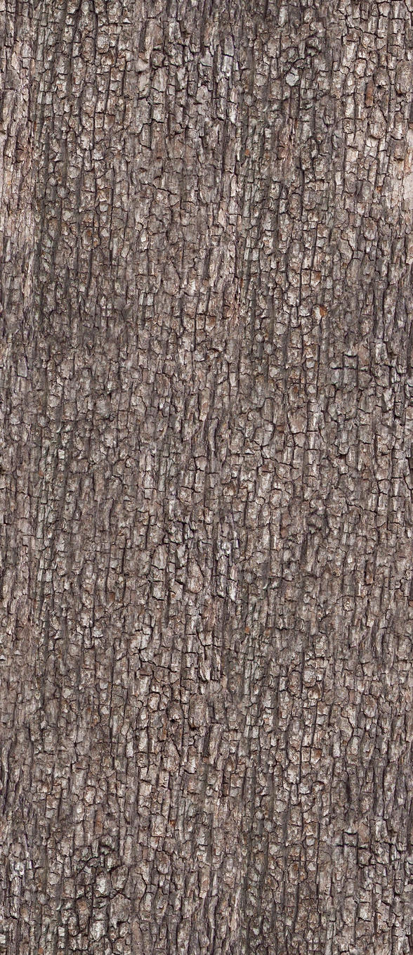 Bark Texture 1 by AGF81