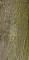 Bark Texture - 2