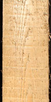 Wood Texture - 19