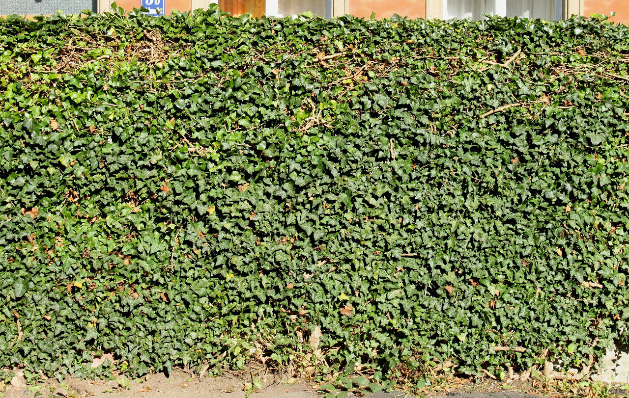 Ivy Texture - 1 by AGF81