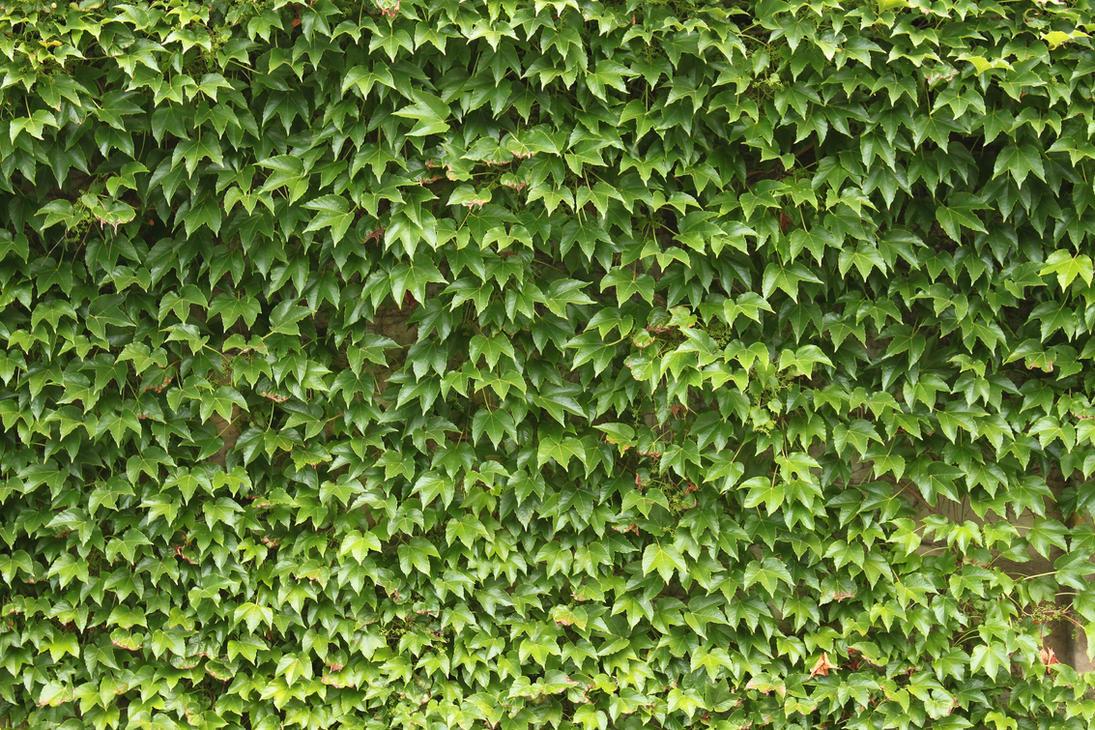 Ivy Green Tour Price