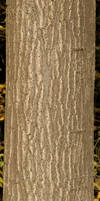 Bark Texture - 6