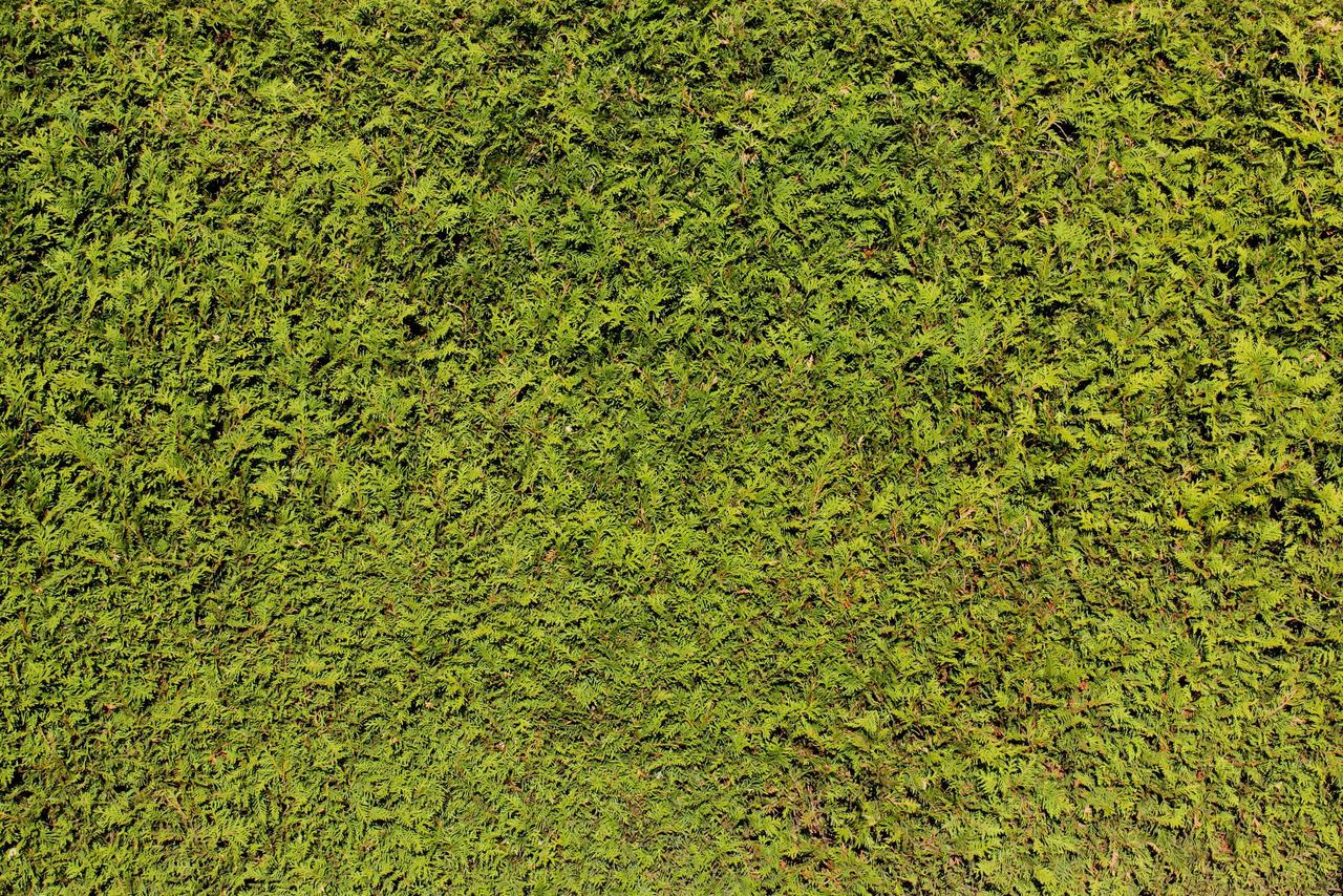 Hedge Texture - 2