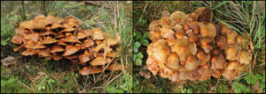 Mushrooms by AGF81
