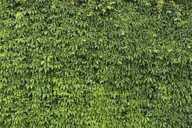 Ivy Texture - 7 by AGF81