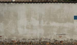 Wall - D666
