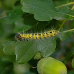 Caterpillar - D675