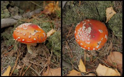 Mushroom Reference - D676