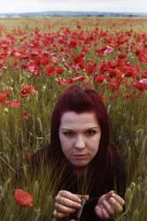 Poppies n.1